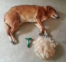 Petco Dog Shedding Blade by Amazon Com Black Friday Sale K9konnection Pet Grooming Brush