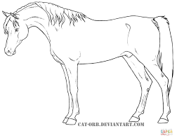 Egyptian Arabian Coloring Page Horse Pages