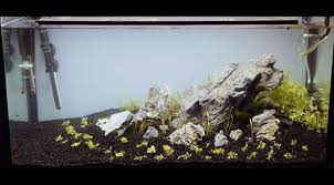 112l Iwagumi Aquascape Set-Up - YouTube How To Set Up An African Cichlid Tank Step By Guide Youtube Aquascaping The Art Of The Planted Aquarium 2013 Nano Pt1 Best 25 Ideas On Pinterest Httpwwwrebellcomimagesaquascaping 430 Best Freshwater Aqua Scape Images Aquascape Equipment Setup Ideas Cool Up 17 About Fish Process 4ft Cave Ridgeline Aquascape A Planted Tank Hidden Forest New Directly After Setting When Dreams Come True