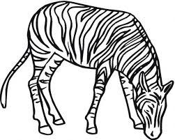 Free Preschool Coloring Pages Zebra