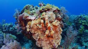 Pumpkin Patches Maryland by Nassau U0027s Best Dive Sites Pumpkin Patch Reef Sport Diver