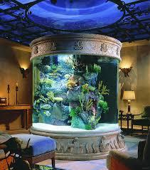 14 ideen um das aquarium aufzupeppen