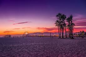 Palm Trees Santa Monica Ocean Los Angeles California Beach USA