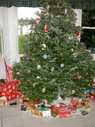 Frasier Christmas Tree by No Room For A Traditional Christmas Tree Try A Norfolk Island