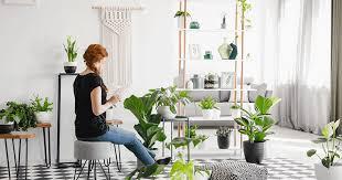 8 zimmerpflanzen für menschen ohne grünen daumen weekend at