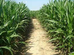 Pumpkin Patch Hammond La by Amazing Fall Fun Indiana U0027s Best Corn Maze