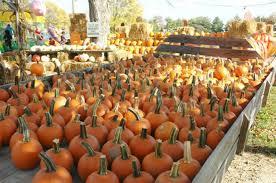 Pumpkin Farms In Belleville Illinois by 7 Best Pumpkin Patches In St Louis In 2017