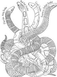 Chinese New Year Snake Colouring Page