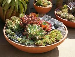 entretien plante grasse d interieur plantes pour jardinières peu gourmandes en arrosage