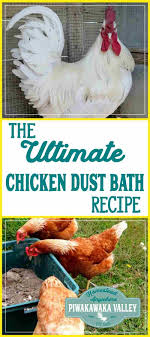 The Ultimate Chicken And Rabbit Dust Bath Recipe | Coops, Backyard ... Why Should You Compost Chicken Manure Is Naturally High In 1105 Best Backyard Project Images On Pinterest Raising Baby Chick Playground Coops Pet Chickens And Worming Backyard Controversial Here Are Tips How To Naturally Treat Coccidiosis Your Chickens Natural Treatment Of Vent Prolapse Ducks 61 To Me Raising Means Addressing Healthkeeping Deworming Homesteads
