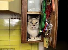 cat in house the with 700 cats california who takes in strays at