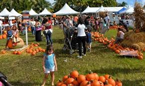 Pumpkin Patch Tampa 2014 by Coconut Grove Pumpkin Patch Festival Florida Haunted Houses
