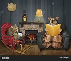 Cat Cup Coffee Wooden Image & Photo (Free Trial) | Bigstock