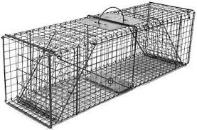 live cat trap feral or domestic cat rabbit galvanized metal collapsible