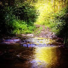 Piney Knob Trail System