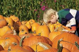 Local Pumpkin Farms In Nj by Where To Pick Your Own Pumpkins In Ny Nj And Ct