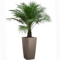 grand pot pour plante interieur grandes plantes vertes maison