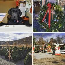 Fraser Fir Christmas Trees Kent by Kent Countryside Nursery Route 52 Garden Center Home Facebook
