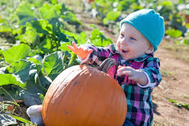 Rutledge Pumpkin Patch Springfield Mo by Family Outing At Rutledge Wilson Farm Cornwell Family Of