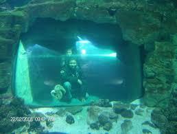 en el acuario de la rochelle picture of aquarium la rochelle la