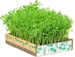 Amazon.com : The Simply Good Box By Home Greens - The Simplest Way ... Home Vegetable Garden Tips Outdoor Decoration In House Design Fniture Decorating Simple Urnhome Small Garden Herb Brassica Allotment Greens Grown Sckfotos Orlando Couple Cited For Code Vlation Front Yard Best 25 Putting Green Ideas On Pinterest Backyard A Vibrantly Colorful Sunset Heres How To Save Time And Space By Vertical Gardening At Amazoncom The Simply Good Box By Simplest Way Extend Your Harvest Growing Coolweather Guide To Starting A