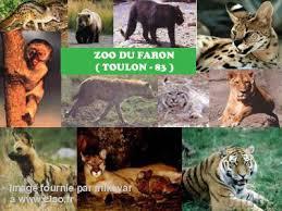zoo du mont faron à toulon 83000 téléphone horaires et avis