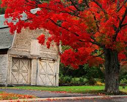 For The World To See: Photo | Happy Fall Y'all | Pinterest | Barn ... Forest Sciences Centre Ubc Mapionet The Old Barn Community Savoury Chef Foods Vancouver Bc Fence Of Old Barn Wood And Used Metal Stuff Pinterest Gamle 17 Great Places To Study At Daily Hive Utownubc Kids Fit Utownubcca Fall 2017 Program Guide By University Neighbourhoods Association Rustic Wedding Venues Isten Hozott