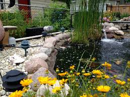 It's Koi Pond Vs. Heron Vs. Chicago Police Officer In Epic ... Beautiful This Is The Design I Would Pick Just Fill In Fresh Ideas Fish Pond Design Koi Pictures Sustainable Backyard Farming How To Dig A Raise What Should You Build Ponds And Waterfalls To Make It Diy A Natural Your Institute Of Garnedgingsteishplantsforpond Garden With Waterfall Mini Outdoor Installation Hgtv Picture Home Fniture Ce Pontz Sons Landscape Koi Fish Pond Garden Ideas 2017 Dignforlifes Portfolio Designs Small Backyard Ponds