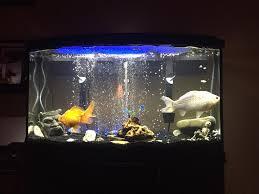 aquarium live plant bulbs aquarium design ideas