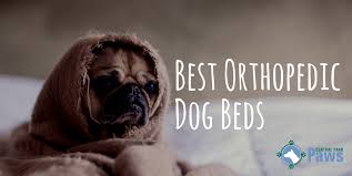 best orthopedic dog beds of 2017 get the best rest for your pooch