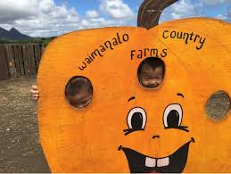 Waimanalo Pumpkin Patch Oahu by Hawaii Mom Blog The 7th Annual Fall Harvest Festival U0026 Pumpkin