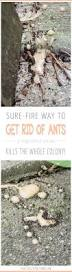 Flying Ants In Bathroom Window by Best 25 Ants In House Ideas On Pinterest Homemade Ant Killer