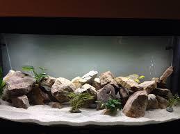 idée décoration naturelle et aquarium plus utilisé aquariums et