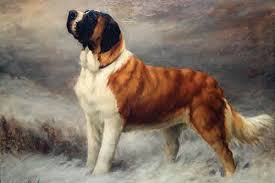 Do Smooth Coat St Bernards Shed by 5 Ways Of Looking At A Saint Bernard American Kennel Club
