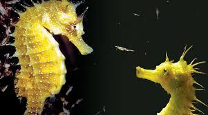atlantic aquarium la rochelle