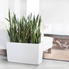 Best Plant For Bathroom by 7 Succulents That Will Thrive In Home Chill Spots Kindland