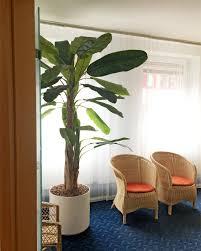 europalms bananenbaum kunstpflanze 240cm