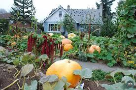 Glass Blown Pumpkins Seattle by Die Besten 25 Pumpkin Patch Seattle Ideen Auf Pinterest Kürbis