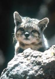 mountain cat meow 9 amazing cats of south america page 2 of 3