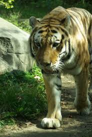 Bronx Zoo Halloween 2014 by 241 Best Zoos U0026 Museums Images On Pinterest Zoos American Art