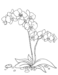 Printable Orchid Coloring Page Free PDF Download At Coloringcafe