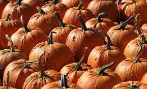 Best Pumpkin Farms In Maryland by 10 Best Pumpkin Patches Near Chicago Chicago U0027s B96 U2013 96 3 Fm