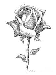 Drawn Rose Black And White 6