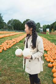 Pumpkin Picking In Ct by Simply Lovebirds U2022 Page 2 Of 13 U2022 New England Lifestyle U0026 Travel Blog