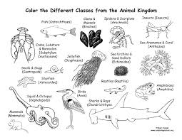 Animals From Every Class Of The Animal Kingdom Coloring Page