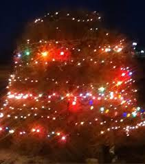 Tumbleweed Christmas Trees by Welcome To Wyoming Tumbleweed Christmas Tree Pics