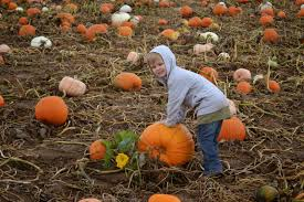 Colorado Pumpkin Patches 2017 by Visiting Anderson Farms Fall Festival In Erie Colorado Building