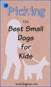 Best Non Shedding Small Dogs by Guide To The Best Small Breed Dogs For Kids