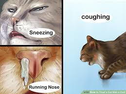 cat runny nose the best ways to treat a cat with a cold wikihow