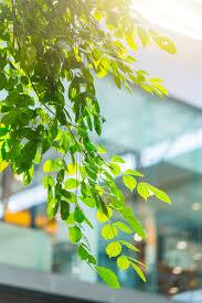 bureau eco intérieur vert de bureau de bâtiment d eco avec l arbre d usine